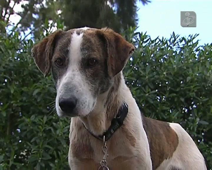 Cão resgatado por bombeiros já tem uma nova família