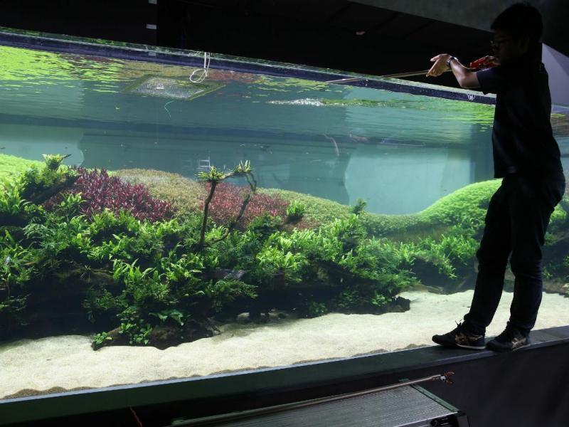 Aquário de 40 metros no Oceanário de Lisboa é a nova atração