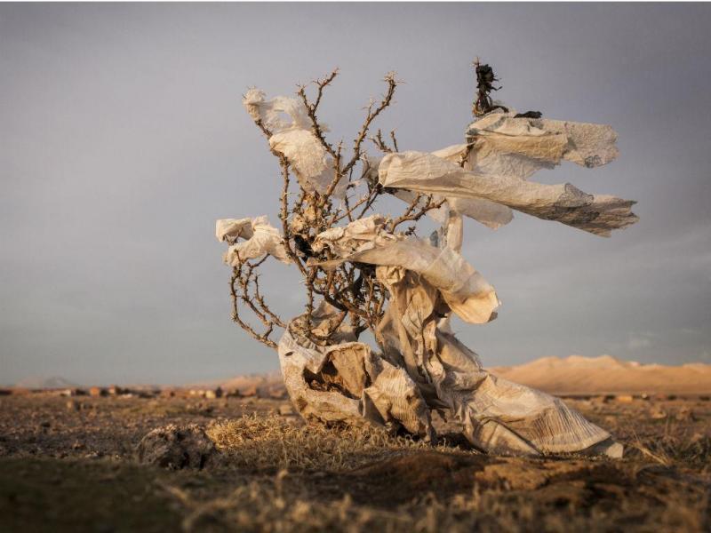 """Eduardo Leal é o vencedor na categoria de """"Ambiente"""" dos prémios de fotojornalismo Estação Imagem 2015 (EDUARDO LEAL / ESTAÇÃO IMAGEM / LUSA)"""