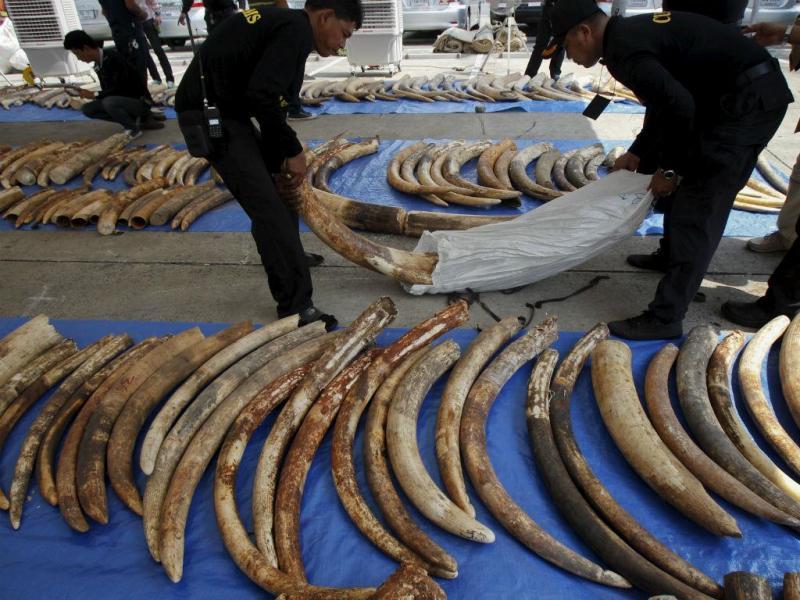 Apreensão de marfim (REUTERS)