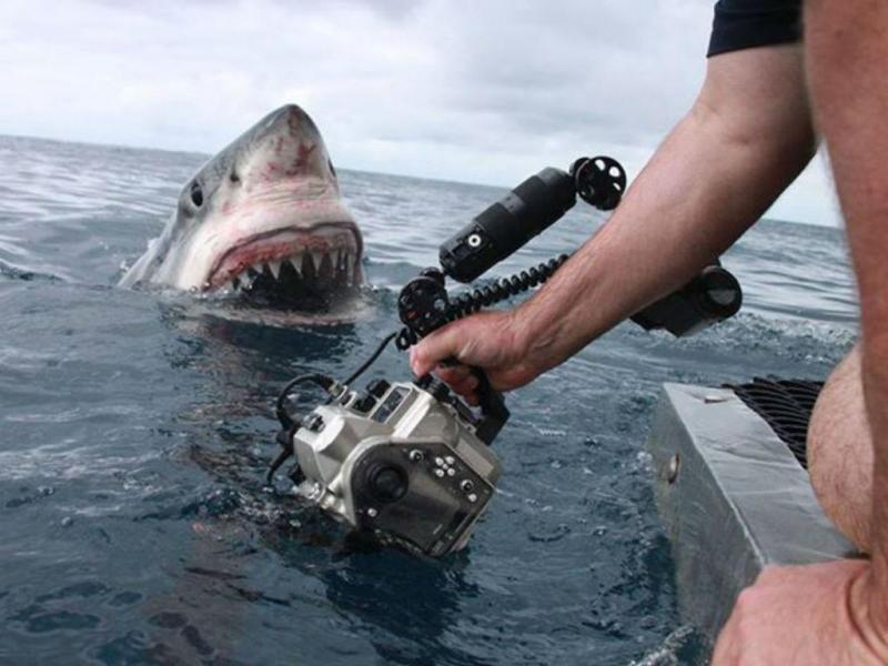 Australiano capta foto impressionante de tubarão (Reprodução Facebook)