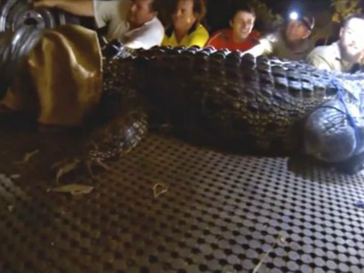 Crocodilo de 4,1 metros capturado na Austrália [Foto: Twitter]