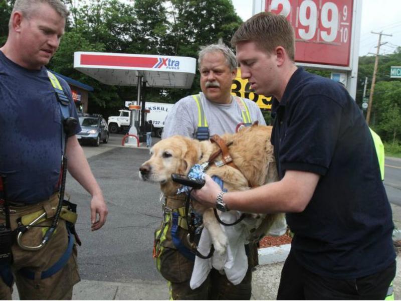 Cão guia atira-se para a frente de autocarro para salvar dona [Foto: Frank Becerra Jr./The Journal News]