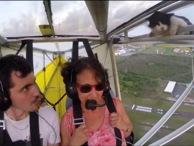 Gato surpreende pilotos em voo de ultraleve [YouTube]