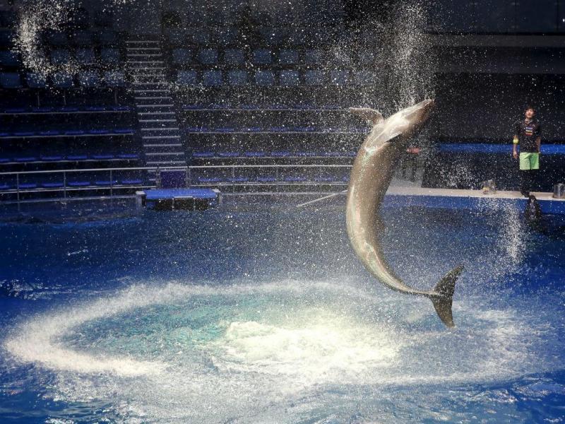 Golfinho (Reuters)
