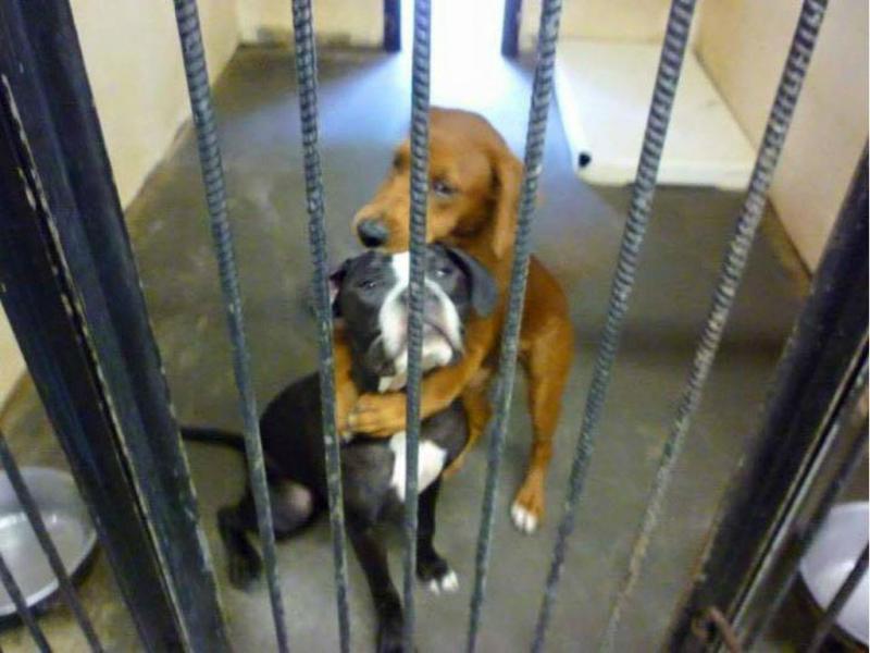 Cadelas salvaram-se porque se abraçaram