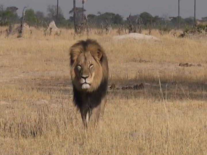 Autoridades já identificaram homem que matou Cecil [Foto: Youtube/ Bryan Orford]