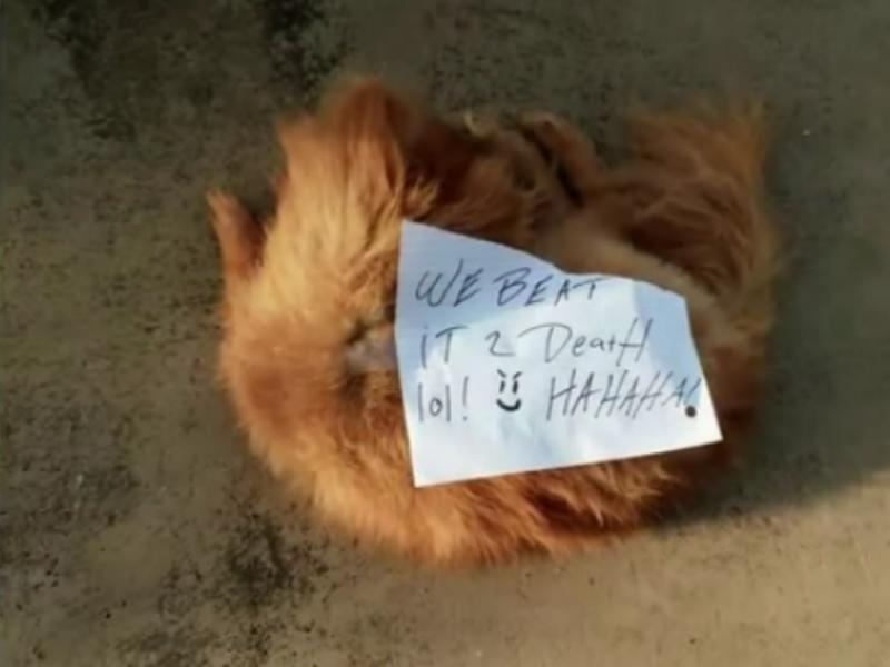 Cão espancado até à morte tinha um bilhete colado no corpo [Fonte: Print screen Youtube]