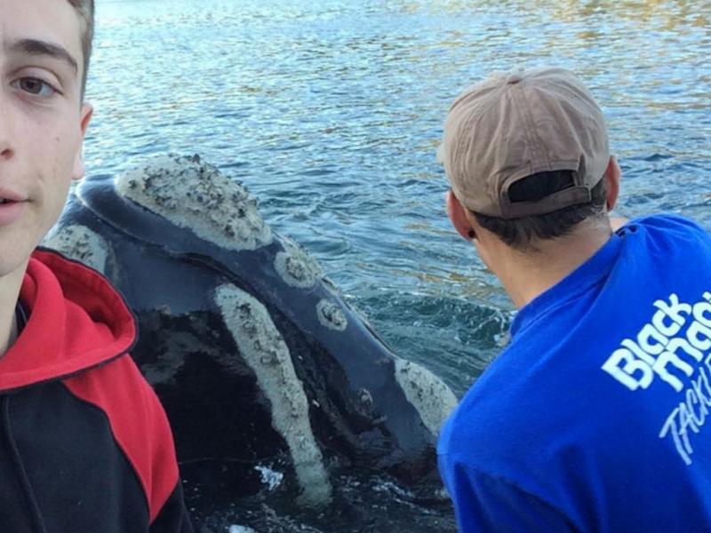 Baleia pede ajuda a pescadores (Reprodução/Instagram/michaelriggio)