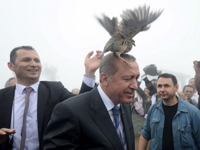 Perdiz aterra na cabeça de Recep Erdogan