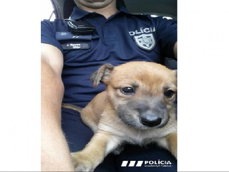 PSP resgata cão abandonado num ecoponto