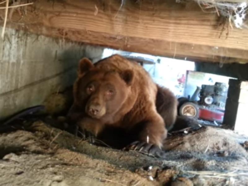 Homens descobrem urso por baixo do alpendre