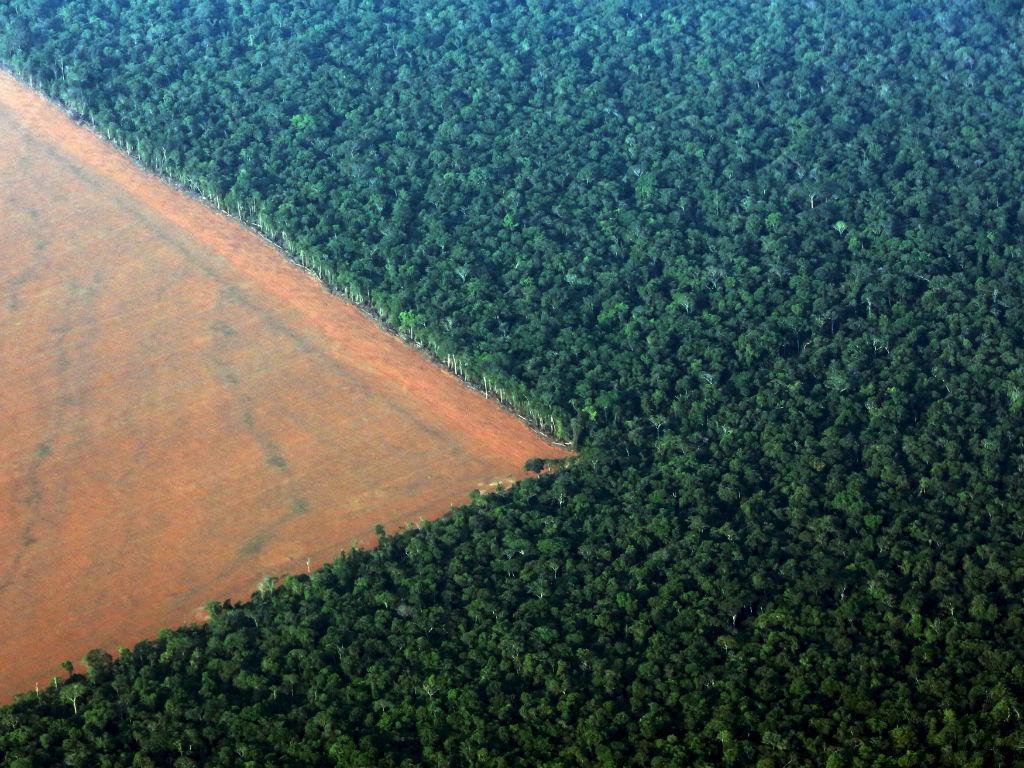 Floresta da Amazónia no Brasil