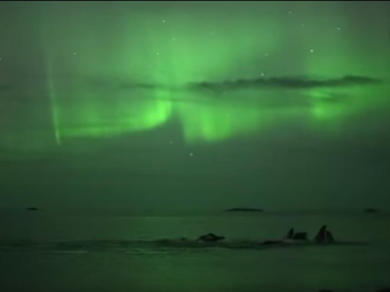 Imagens incíveis mostram baleias a nadar sob aurora boreal