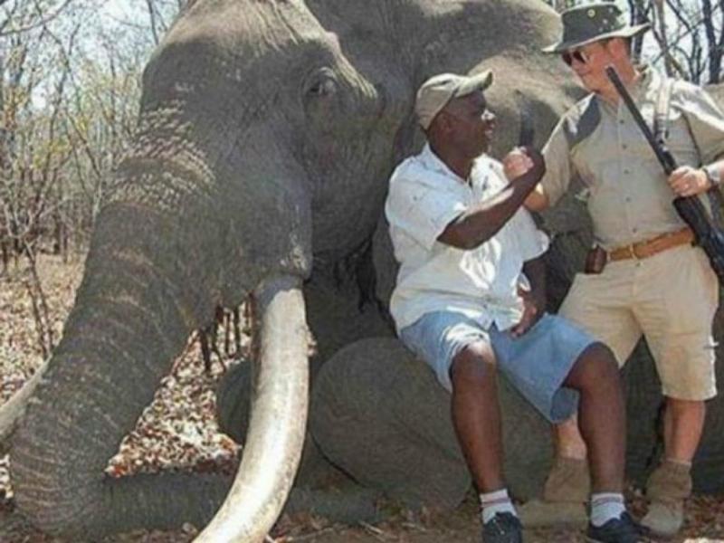 Maior elefante morto em mais de 30 anos (Foto International Animal Rescue Foundation World Action South Africa)