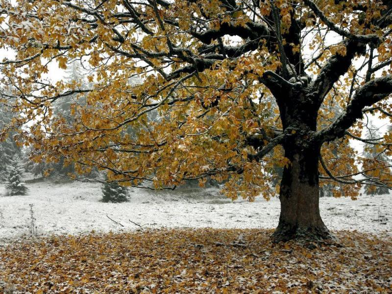 Cores de Outono (REUTERS)