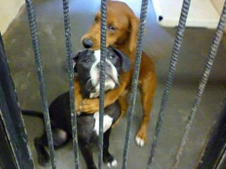 Abraço de kala e Keira ( Reprodução Facebook/Angels Among Us Pet Rescue)
