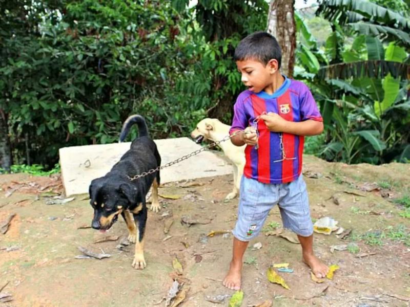 Brasil (Foto Reprodução Marilene Silva/Rede Amazónica)
