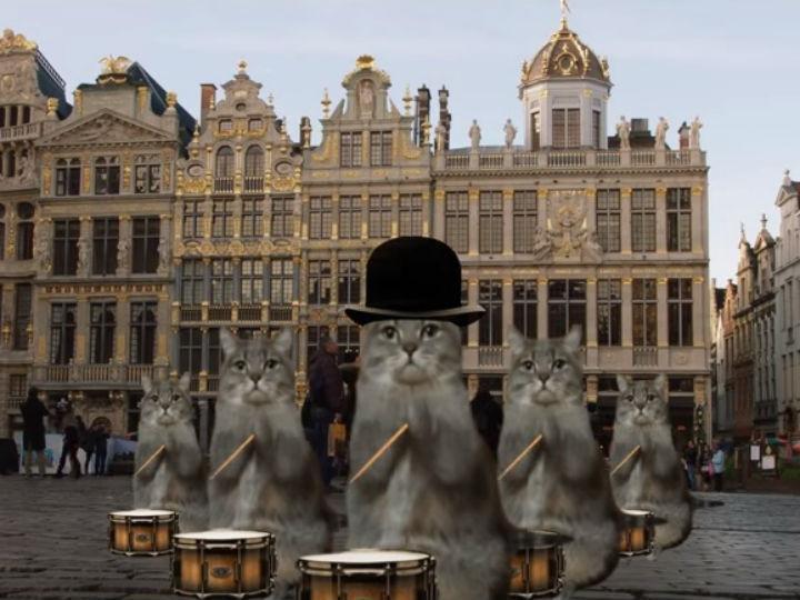 Bélgica promove turismo com gatos