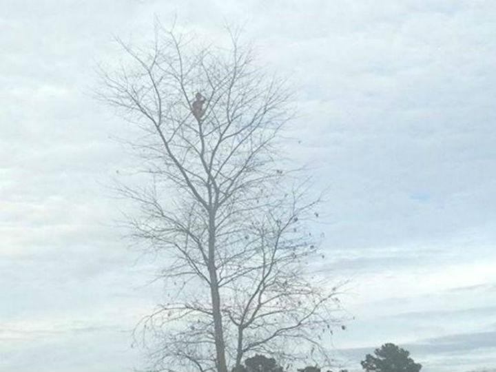 Menino de seis anos fica preso numa árvore com 15 metros (Facebook)