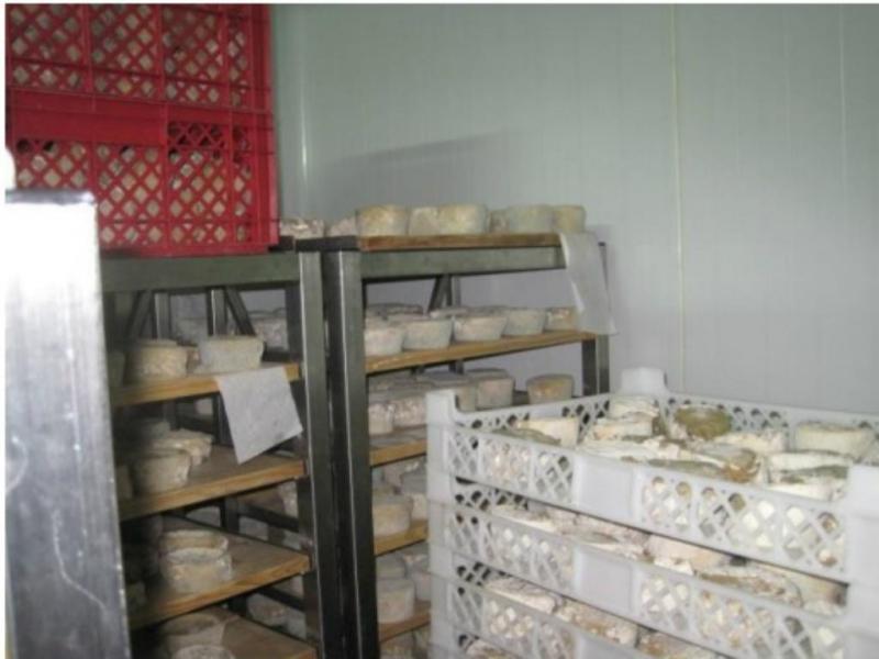 ASAE apreende seis toneladas de queijo em Oliveira do Hospital