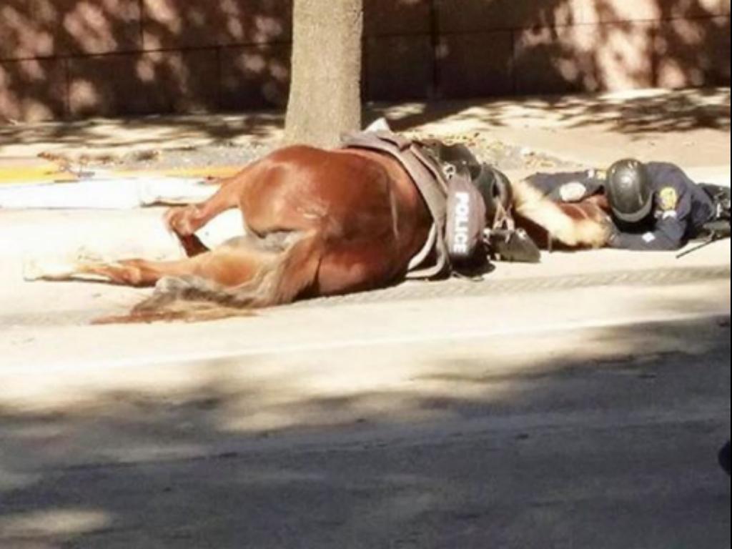 Polía abraça égua moribunda