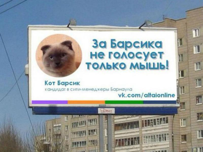 Cidade na Sibéria quer eleger gato como autarca