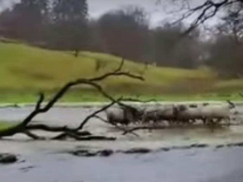 Cão salva ovelhas presas nas cheias