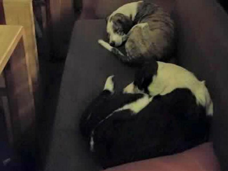 Cães abandonados dormem num café na Grécia (Reprodução Facebook)