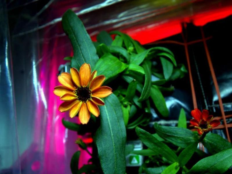 Flor nasce no espaço