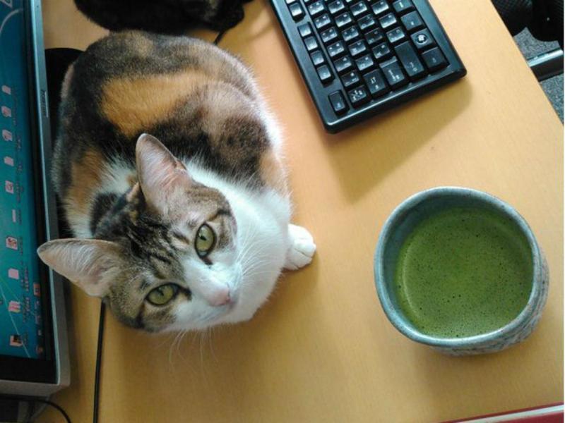Empresa japonesa adota nove gatos