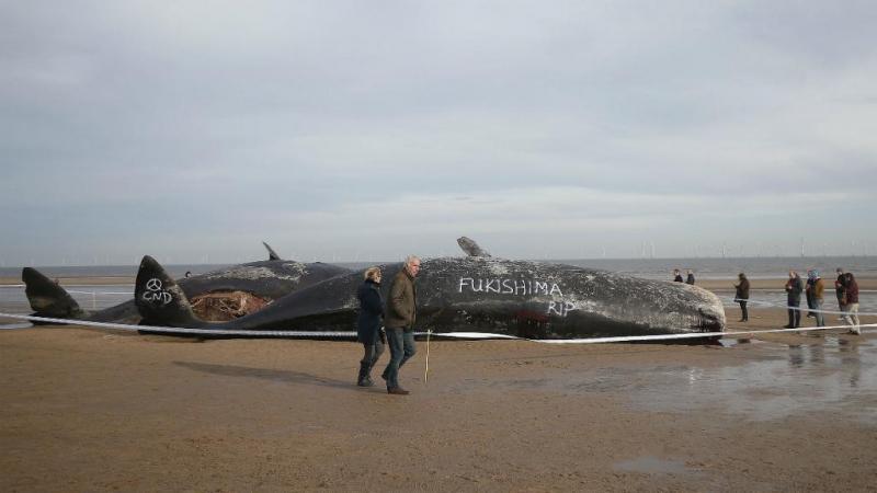 Baleia vandalizada na costa do Reino Unido