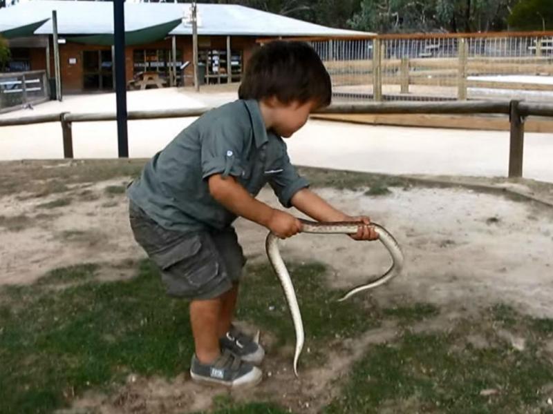 Menino australiano brinca com crocodilos (Reprodução Youtube)