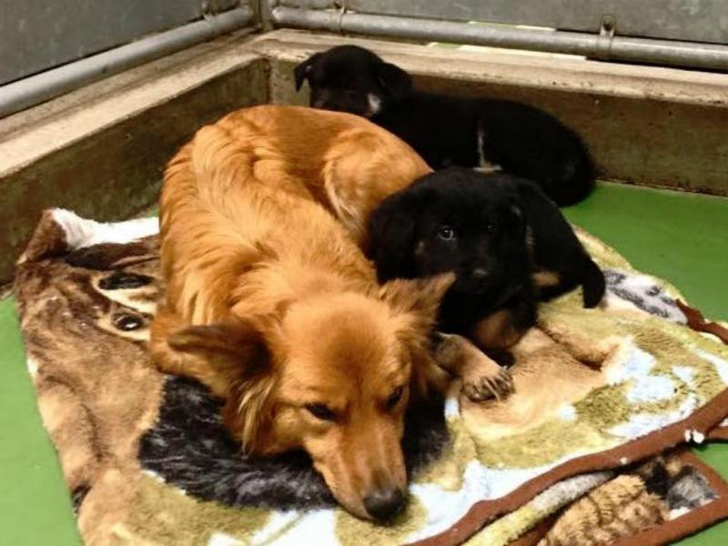 Cadela foge para consolar cachorros órfãos no canil