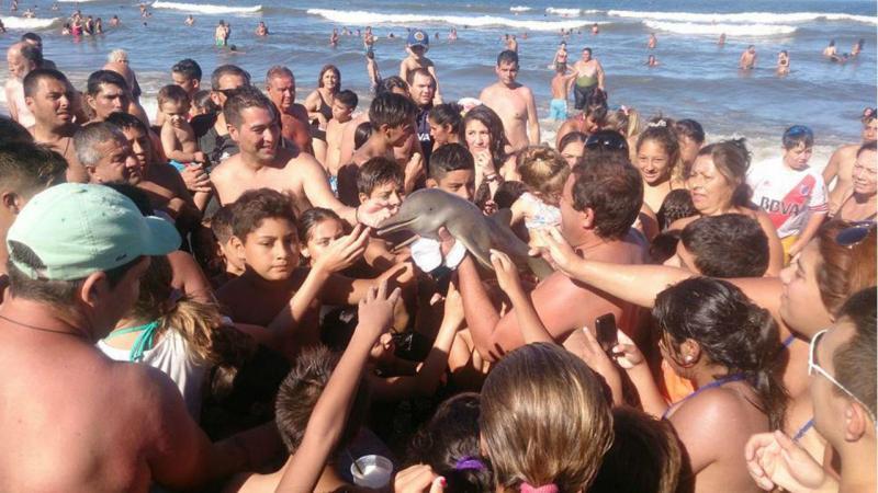 Golfinho dá à costa na Argentina e é usado para selfies