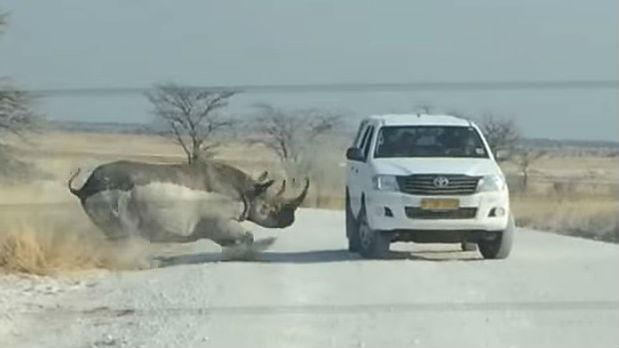 Rinoceronte ataca jeep