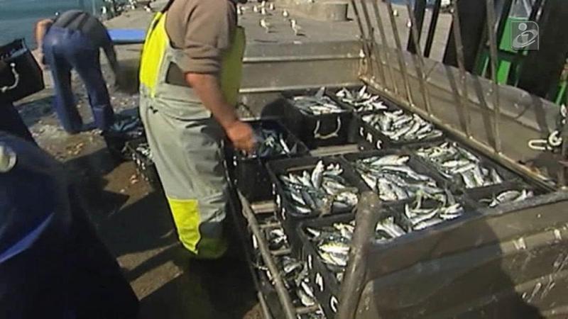 Já se pode pescar sardinha (com um mas)