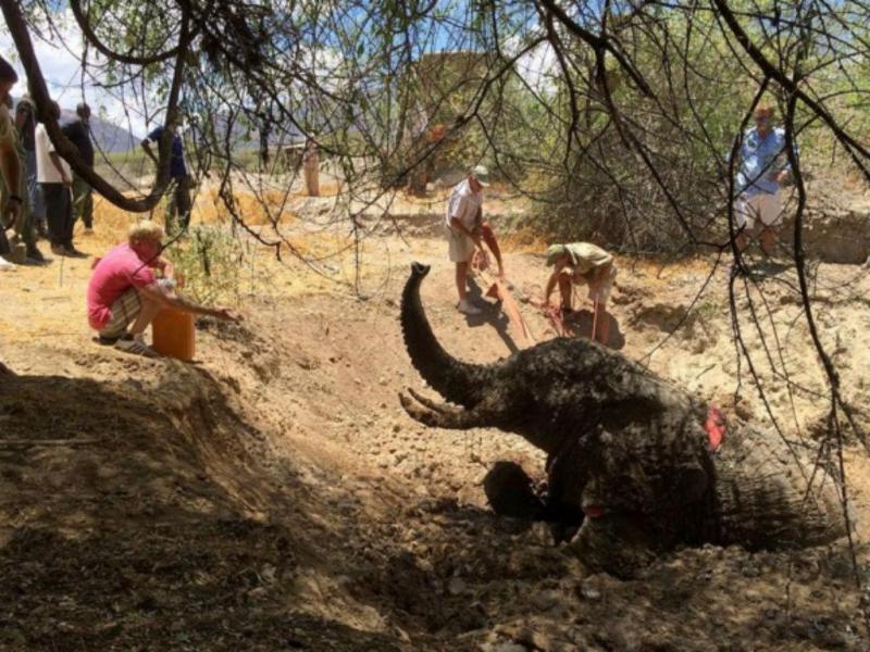 Elefante preso em poço de lama no Quénia (Foto Instagram Jules Binks)