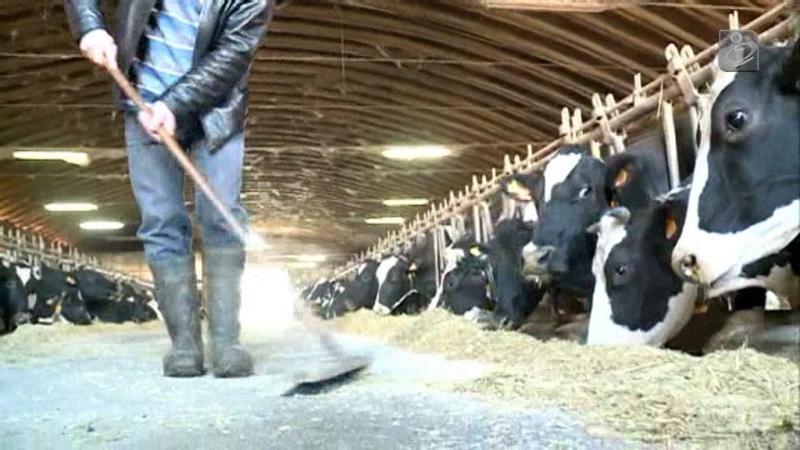 Os problemas que enfrentam os produtores de leite