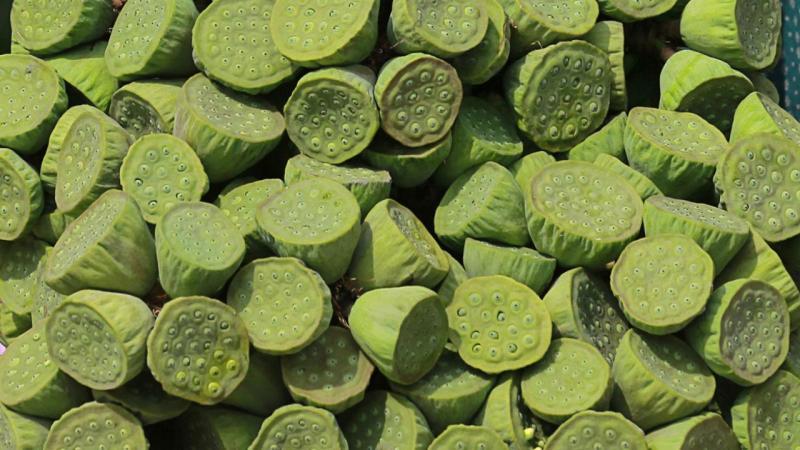 Flor-de-lótus em semente