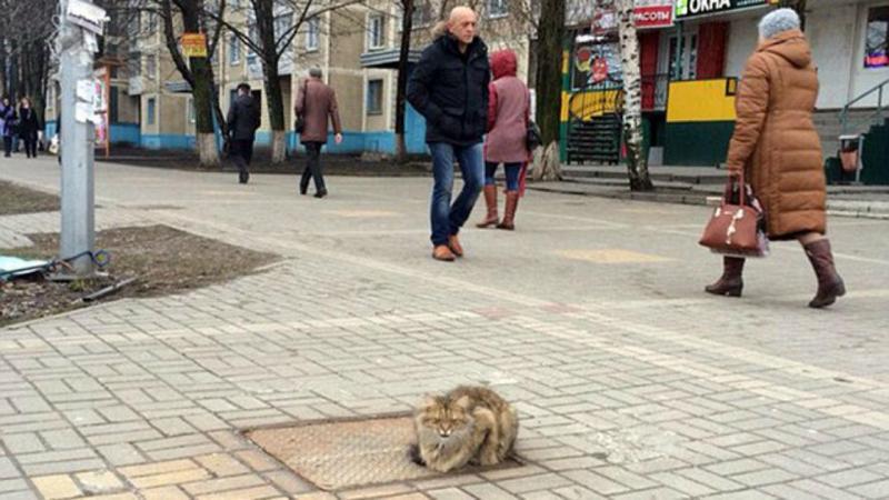 Gato abandonado na Rússia (foto Ostap Zadunayskiy)