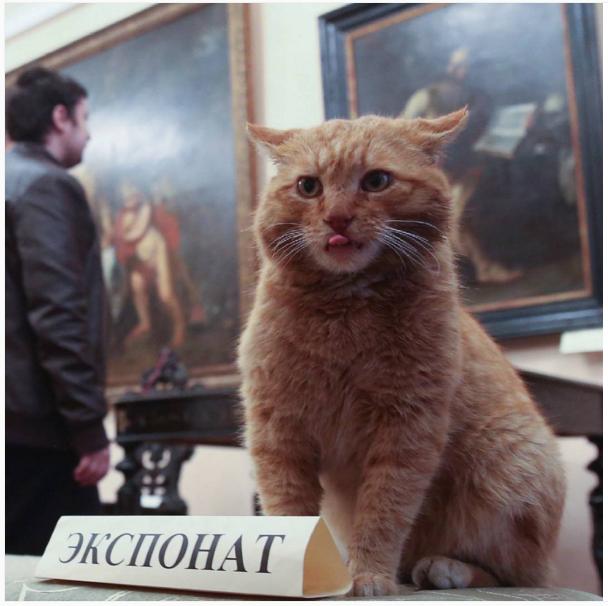 Este gato é porteiro num museu