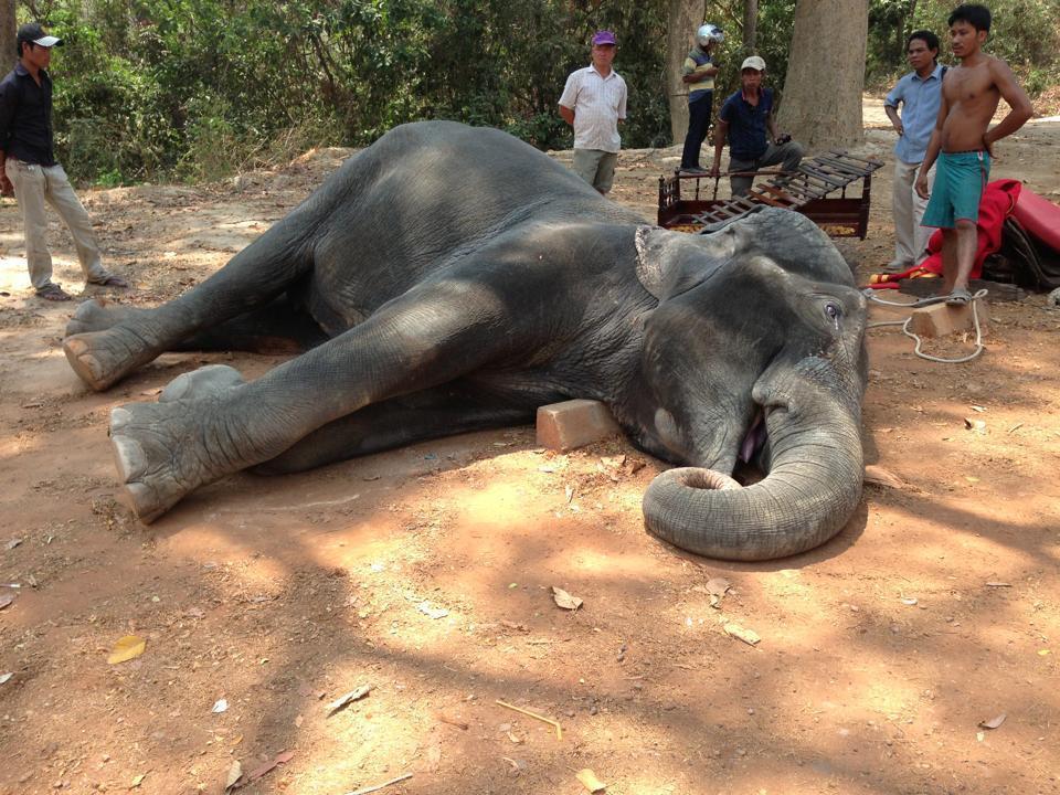 Elefante morre após ter transportado turistas sob 40.º  [Reprodução: Facebook]