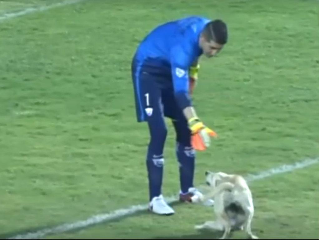 Cão Libertadores