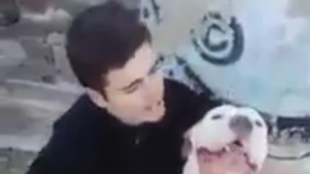 Vídeo de jovem a atirar cão da ponte gerou polémica