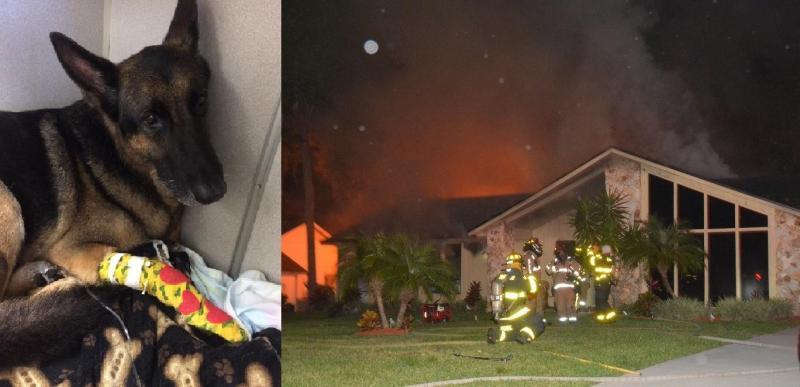 Cão-herói salva duas crianças presas num incêndio
