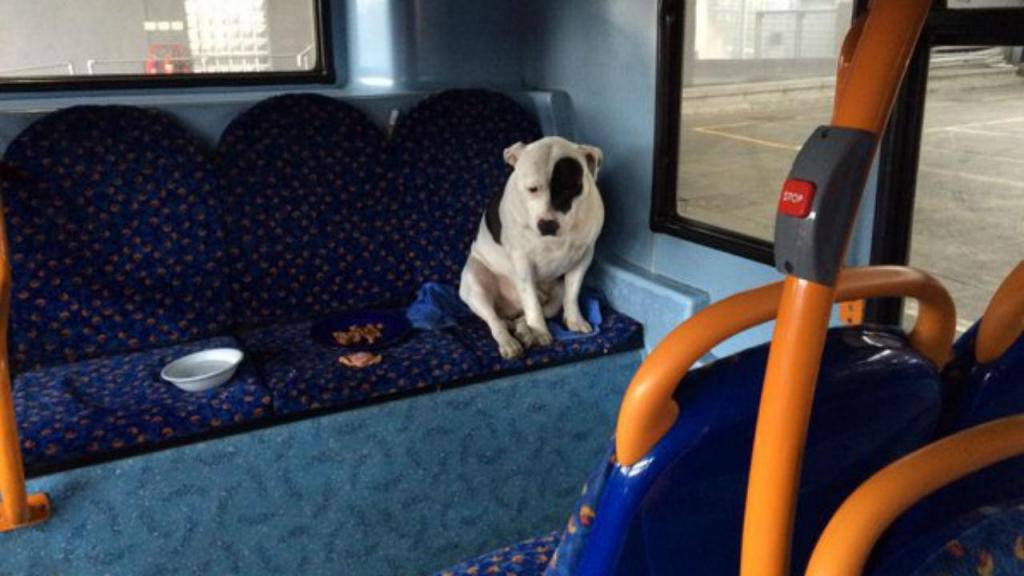 Cão abandonado em Londres