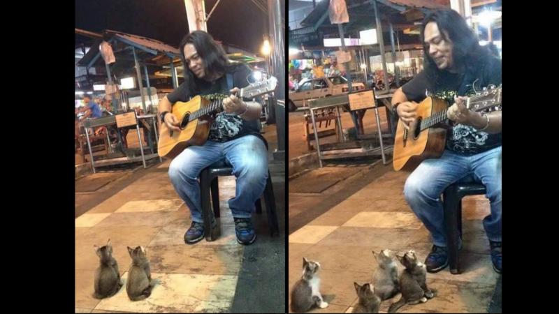 Gatos assistem a concerto de artista de rua