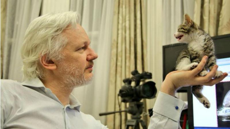 Julian Assange e o seu novo animal de estimação
