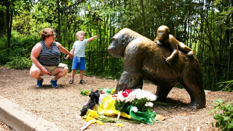 Harambe, o gorila do zoo de Cincinatti, abatido para salvar um menino
